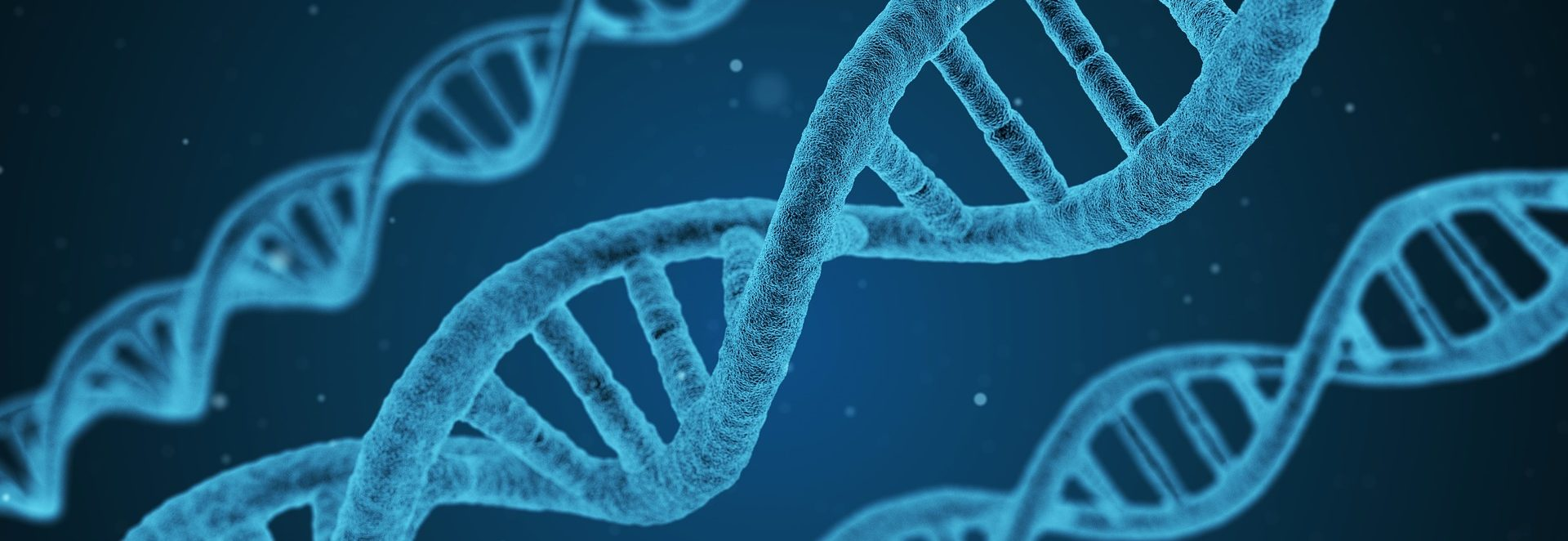 three strands of DNA