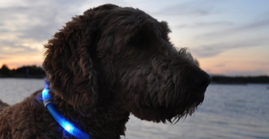 Glowdoggie LED Collar