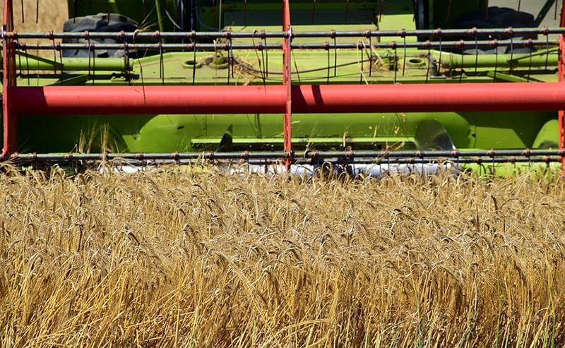 Grain-harvest-min