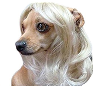 Dog Wigs by Leah Workman
