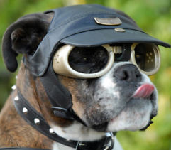 doggles invention