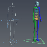 3D skeletal rigging